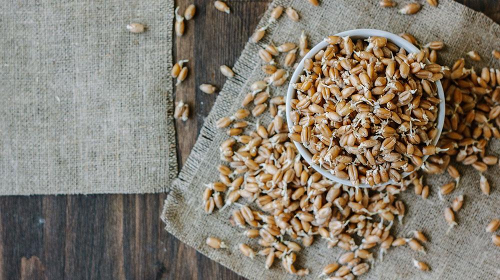 Beneficios del germen de trigo para bajar de peso
