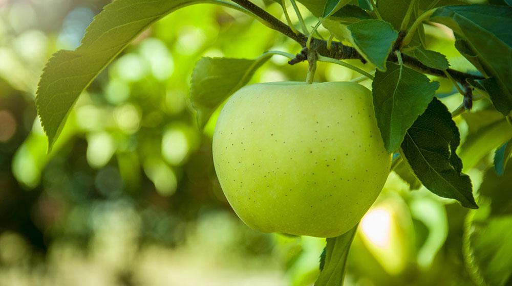 Manzana en ayunas beneficios