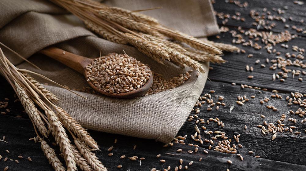 Beneficios del germen de trigo
