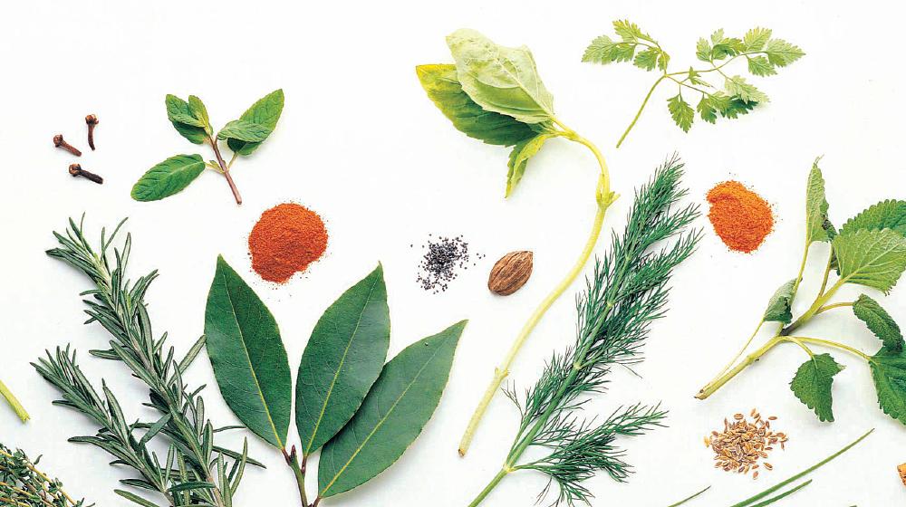 especias y hierbas aromáricas