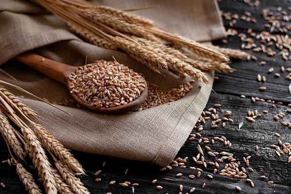 cereales saludables: trigo