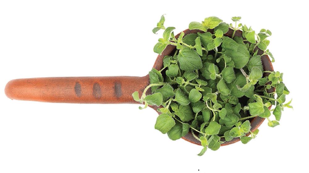 hojas de orégano