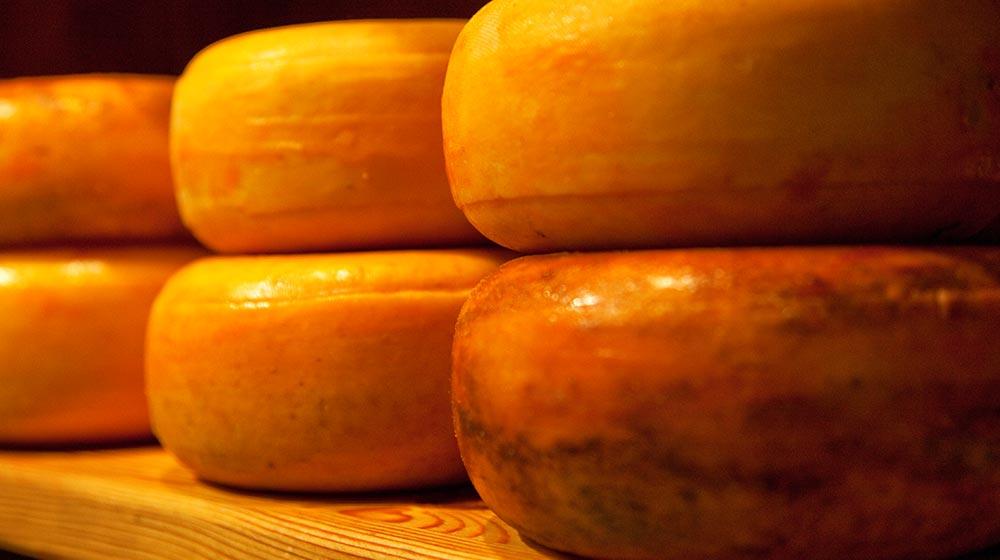 queso holandés