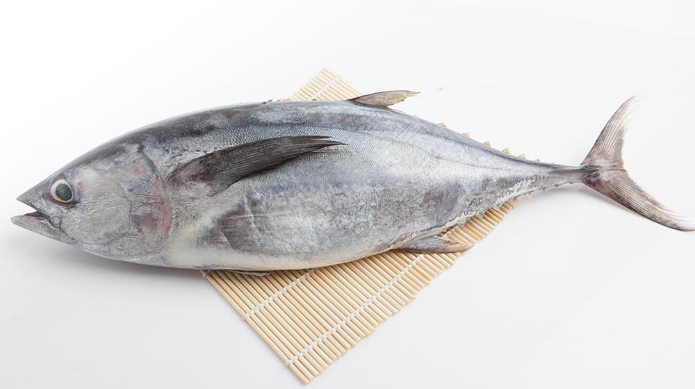 8 recetas de atún, fáciles, deliciosas y rendidoras.