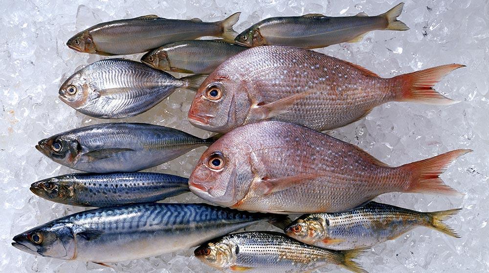 pescado-azul-blanco