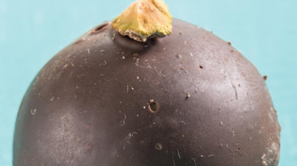 trufas negras de chocolate amargo