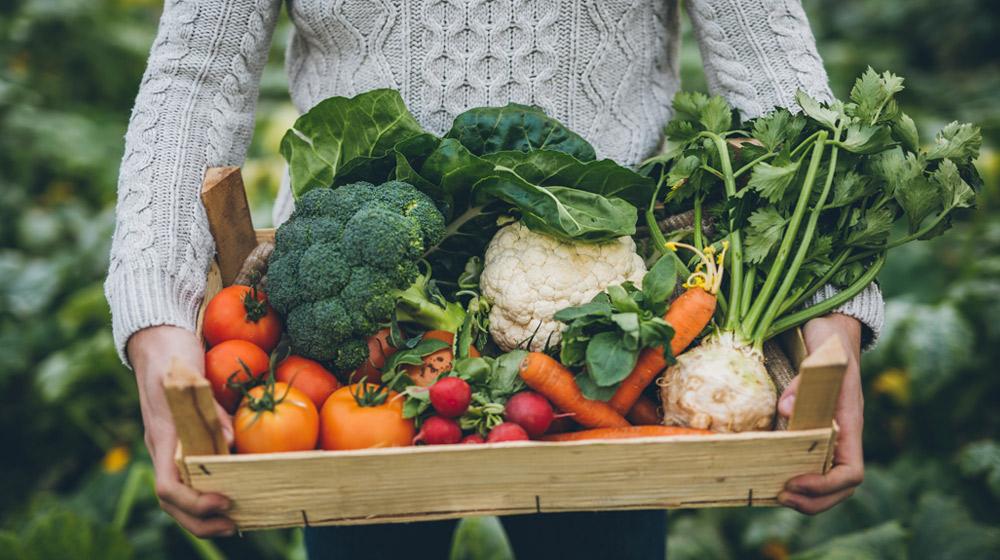 verduras de huerto casero