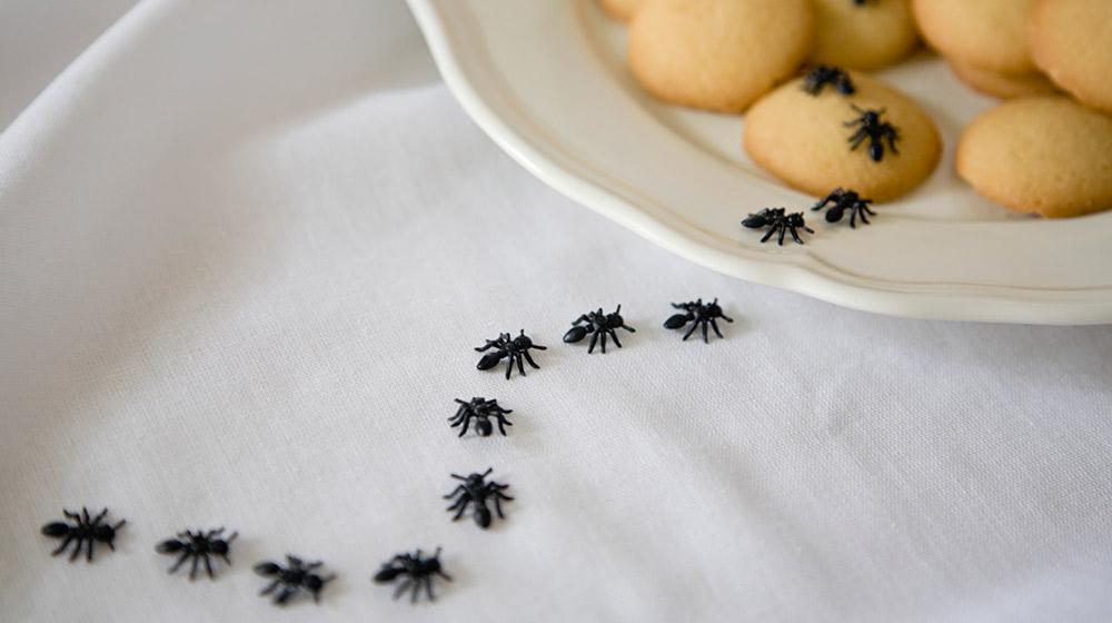remedios caseros para ahuyentar hormigas y cucarachas
