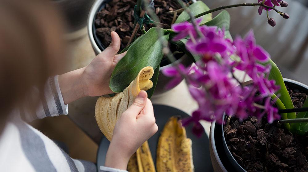 Usos prácticos de la cáscara de plátano
