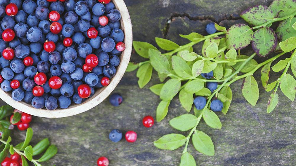 Arándanos azules vs rojos