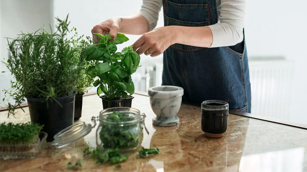 Plantas para alejar insectos