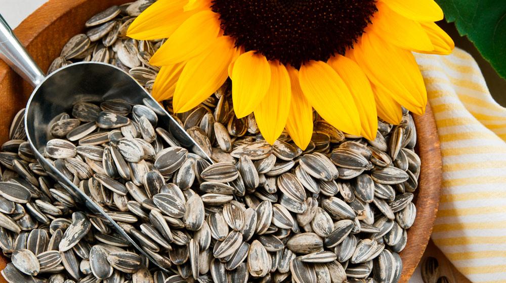 beneficios de las semillas de girasol
