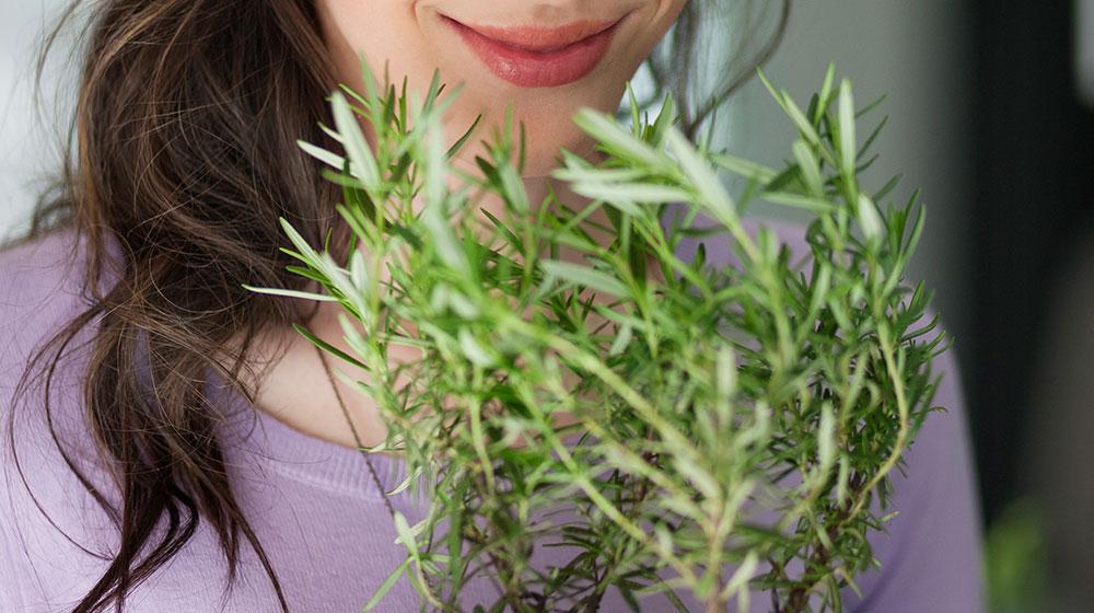 Beneficios del romero para el cabello