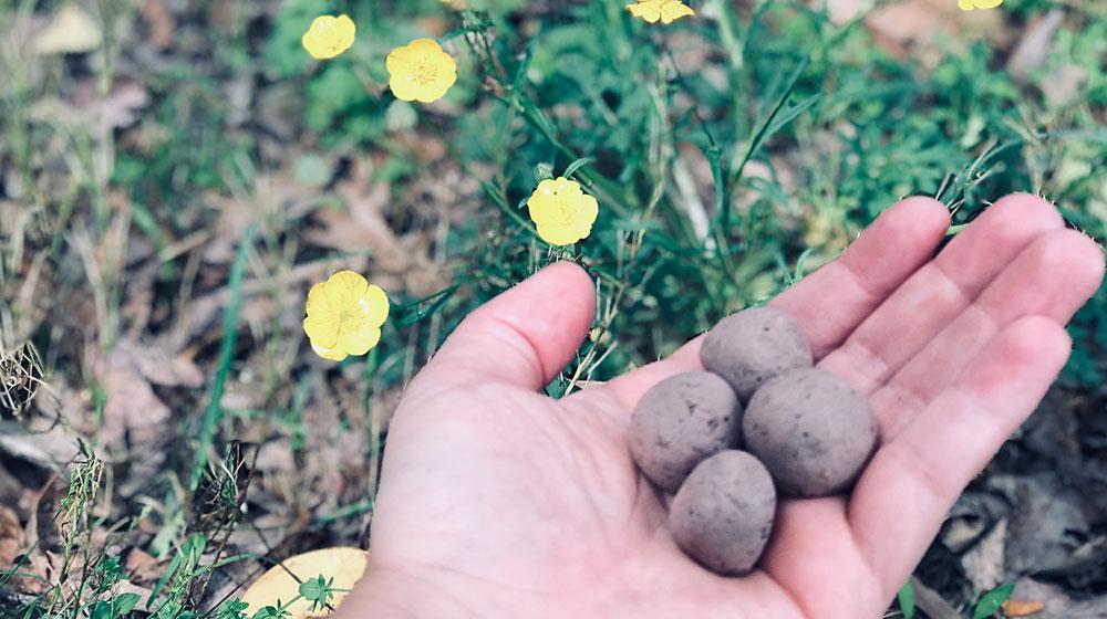 Bombas de semillas fukuoka