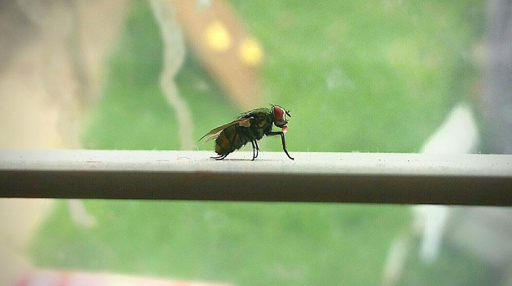 Como ahuyentar moscas