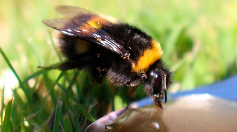 Bebedero para abejas