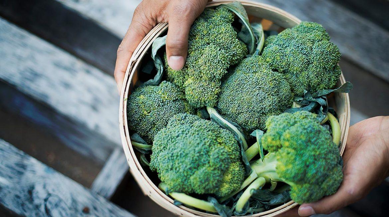 Planta de brócoli