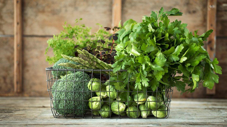 Como conservar el cilantro