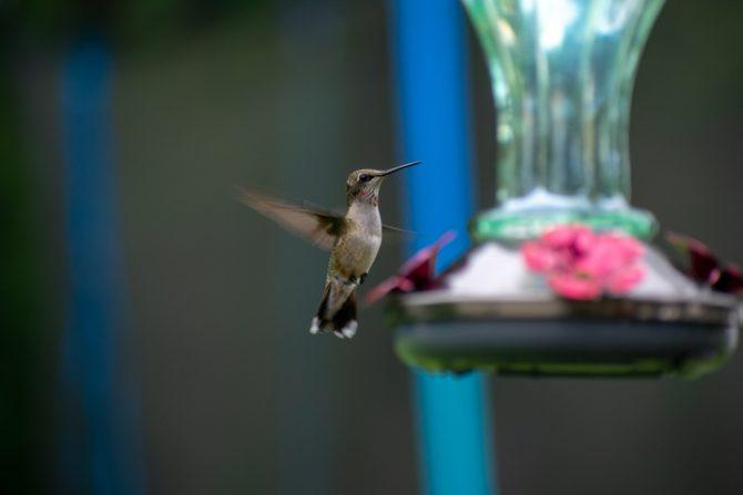 como hacer un bebedero de colibries paso a paso explicado