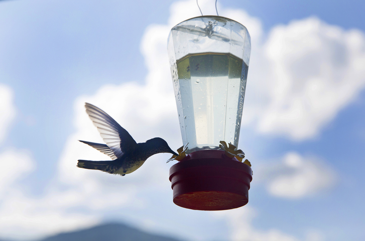como hacer un bebedero para colibries