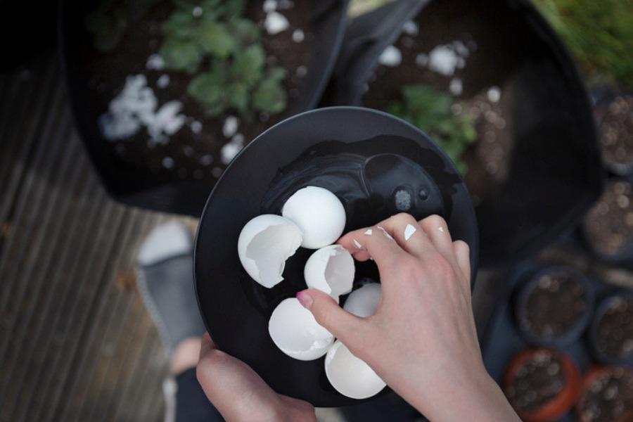 Ácido hialurónico casero: cómo se hace con cáscara de huevo