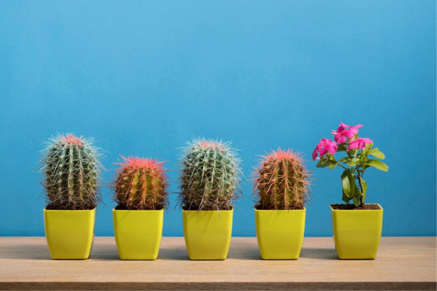 Cactus para las malas vibras