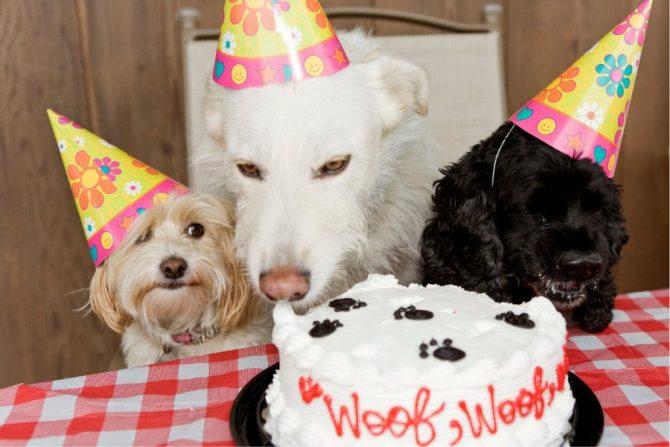 Pastelerías para perros en CDMX