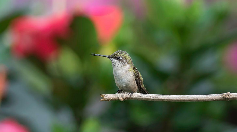 flores para colibries