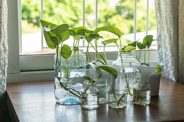 como decorar frascos de vidrio con plantas