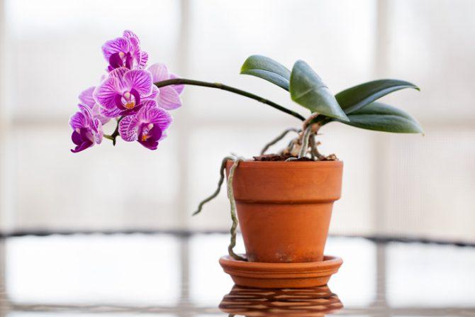 orquidea en el hogar para acabar con las malas vibras