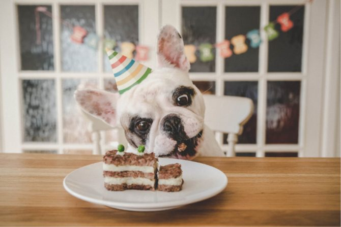 En dónde comprar pasteles para perros