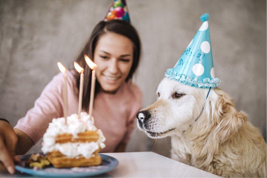 Pasteles para perros en CDMX