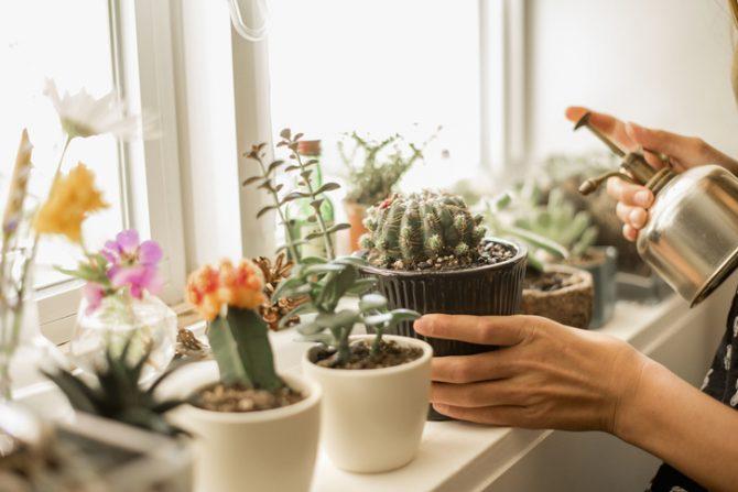plantas magicas para el hogar cactus