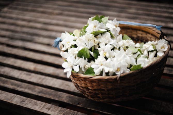 plantas magicas para el hogar jazmin