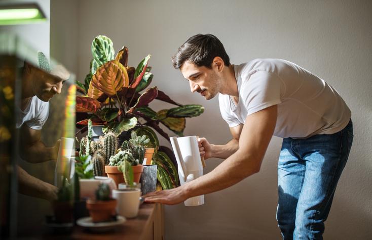 plantas magicas para el hogar