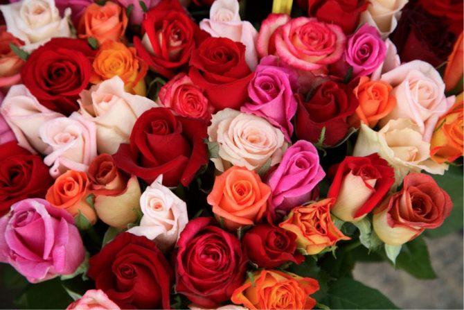 Flores comestibles: rosas