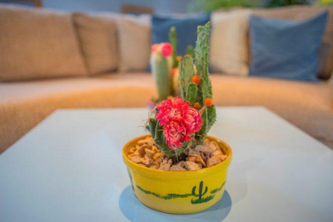 Cuál es el significado de los cactus