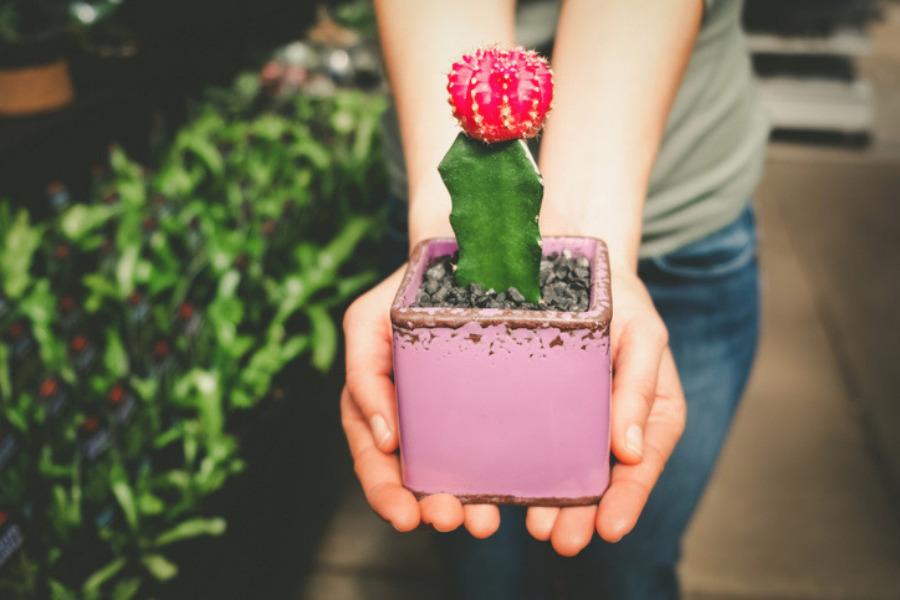 Significado de regalar un cactus