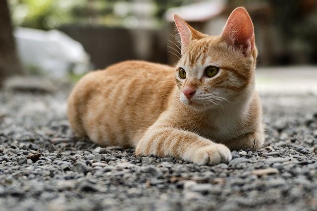 alimentos prohibidos para los gatos