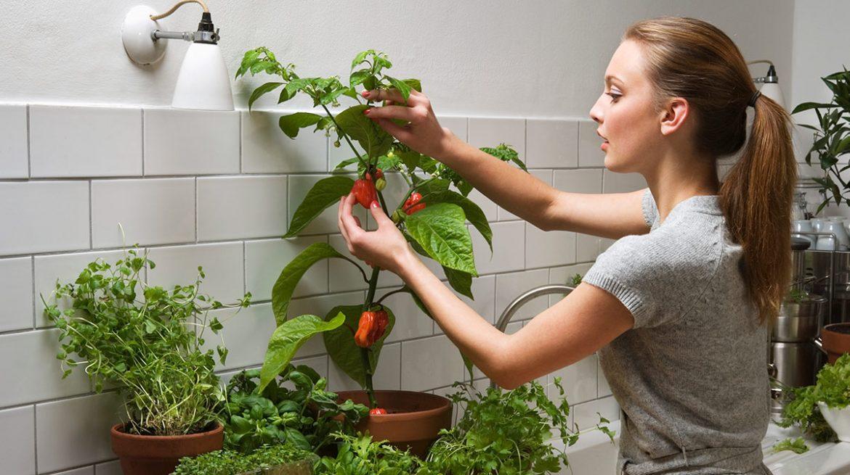 como cultivar pimientos en macetas