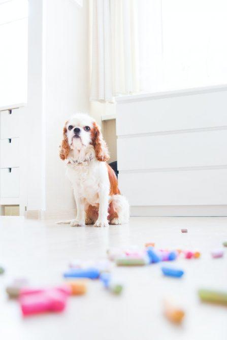 como quitar los malos olores de tus mascotas