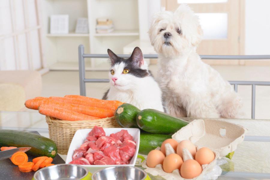 Beneficios del huevo para perros y gatos