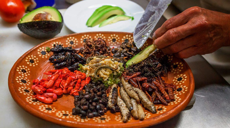 Insectos comestibles en México