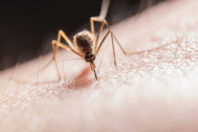 Remedios caseros contra los piquetes de mosquitos