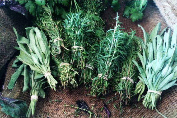 Qué curan las plantas medicinales