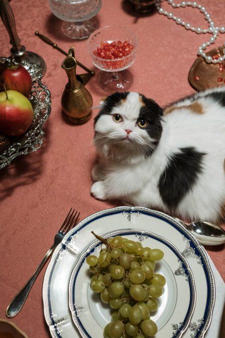 uvas alimentos que no deben comer los gatos