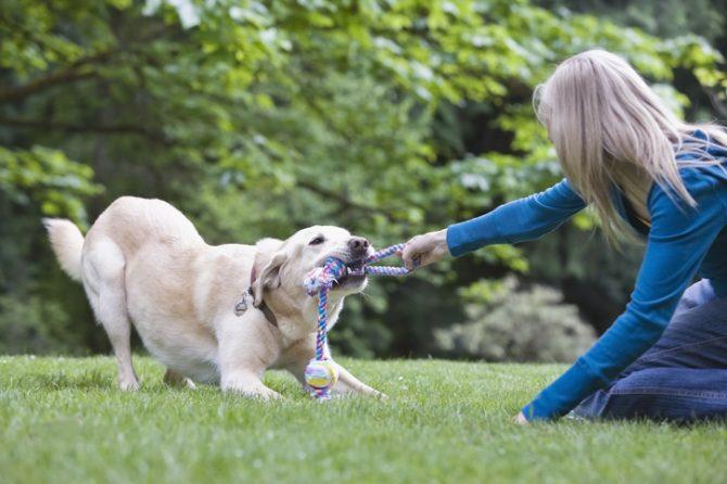 como hacer una trenza de tela para perros