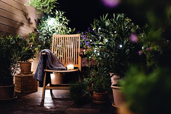 plantas nocturnas