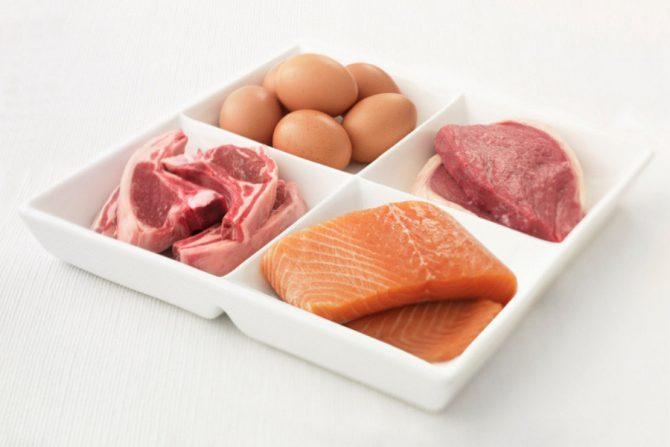 Cuáles son las proteínas animales