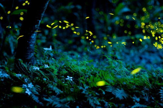 atraer luciérnagas a tu jardín